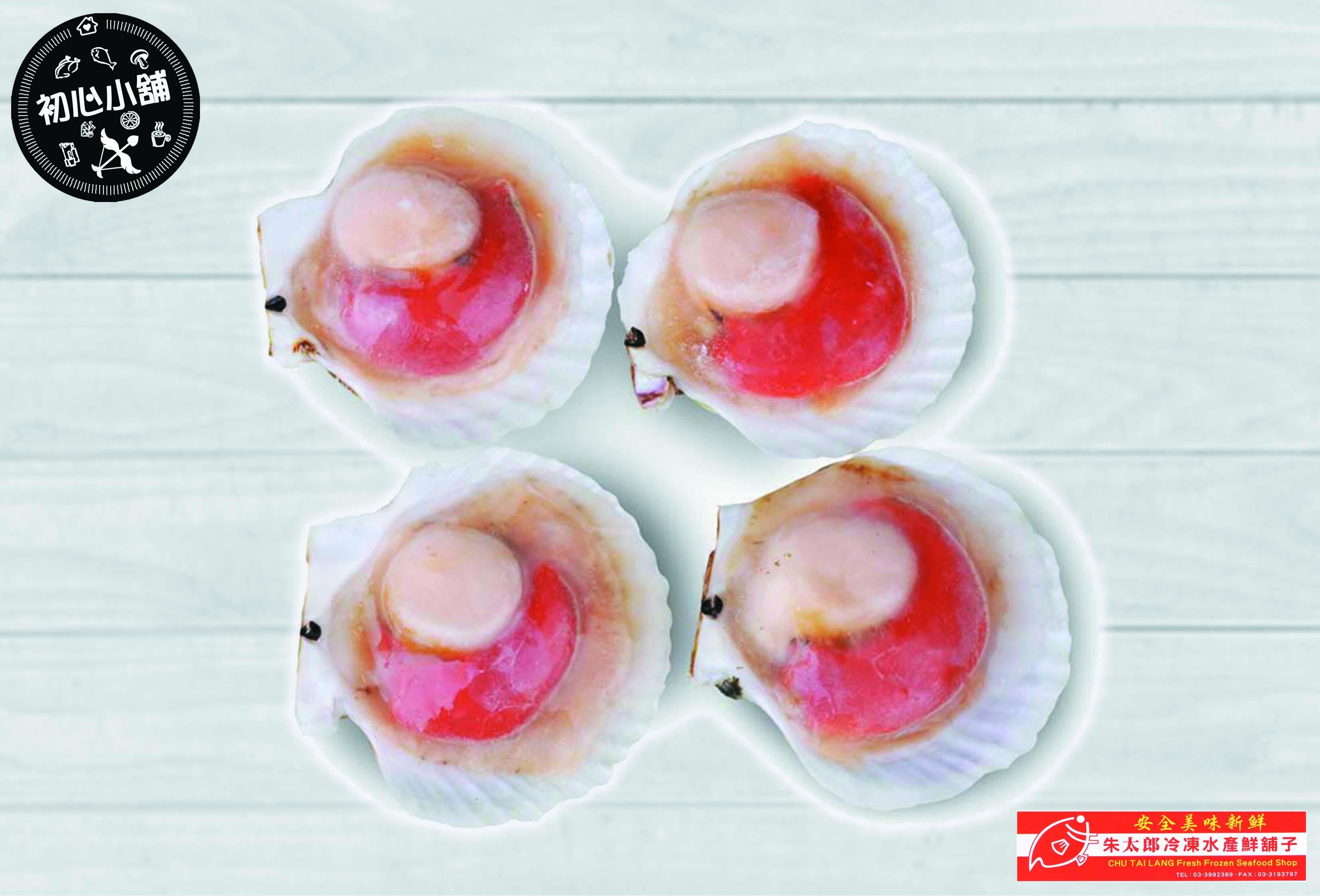 北海道日本扇貝