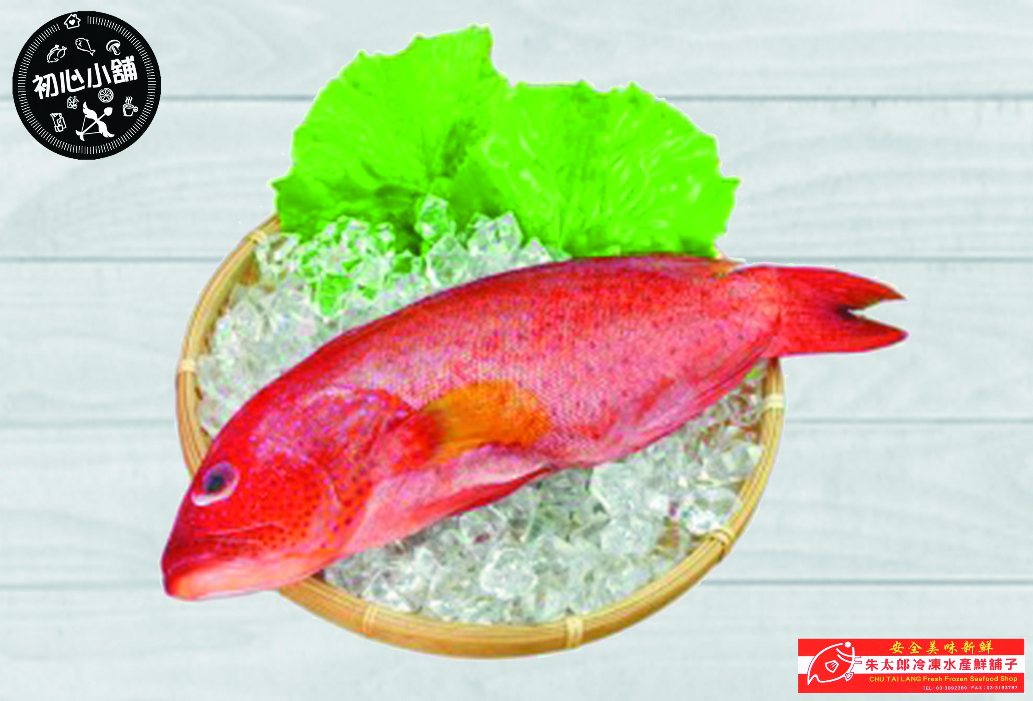 朱太郎野生紅縧魚